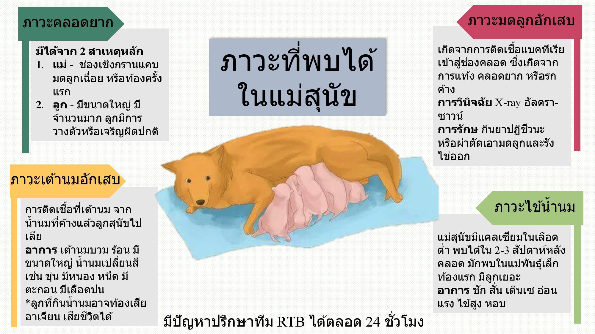 ภาวะที่พบได้ในแม่สุนัข