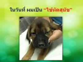 โรคไข้หัดสุนัข-001 title