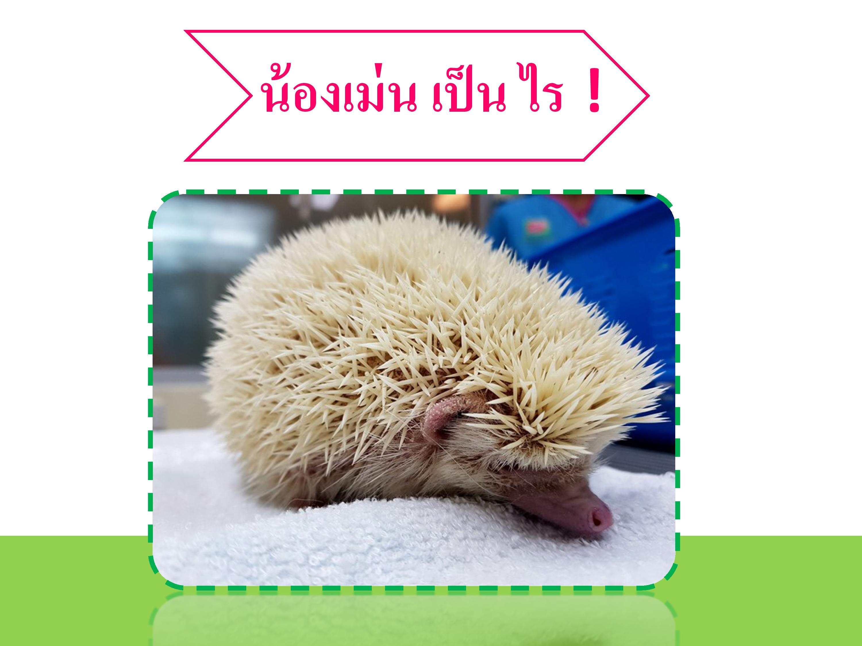 195288_R2 mite in hedgehog-page-004