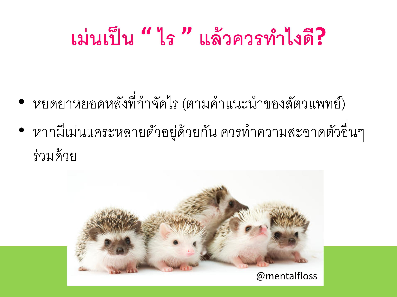 195288_R2 mite in hedgehog-page-007