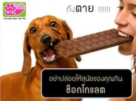 choco-page-001_title