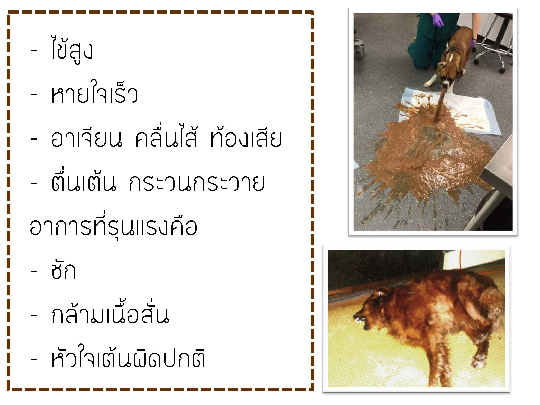 choco-page-004