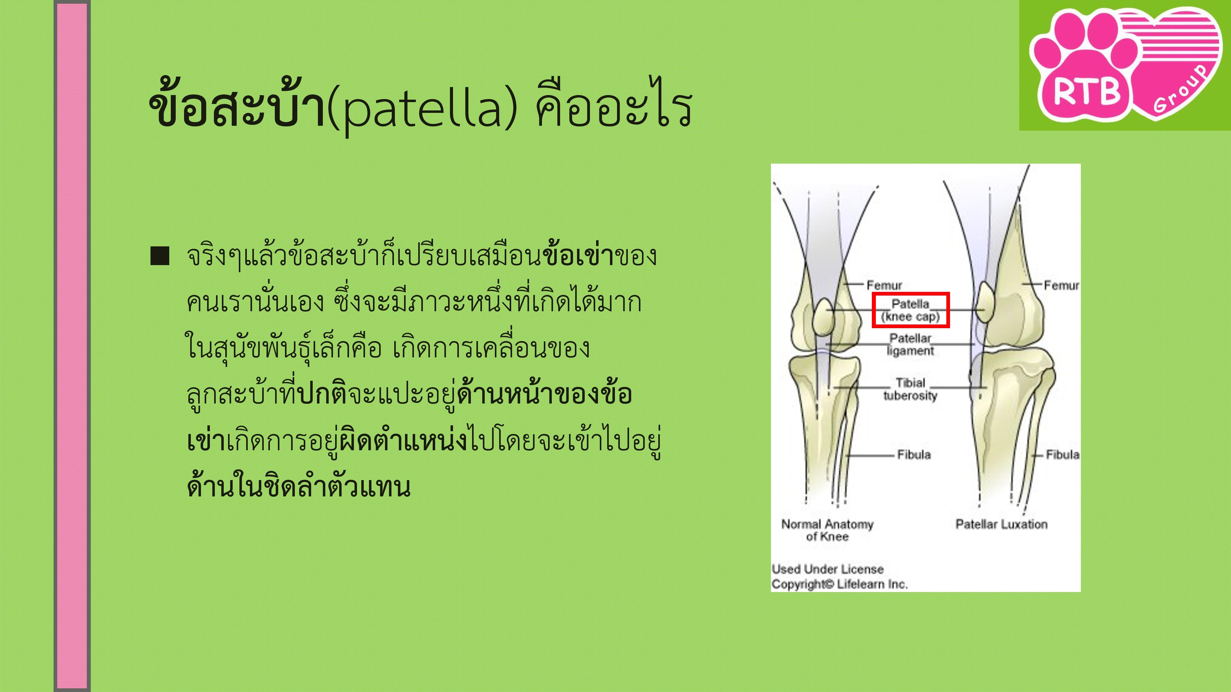 medial patellar luxation-page-002